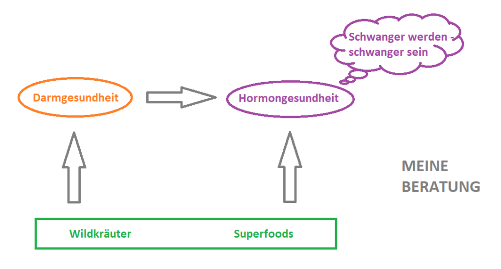Schwerpunkte meiner Ernährungsberatung und deren Zusammenhänge. Darmgesundheit, Hormongesundheit, gesund schwanger werden und schwanger sein. Arbeit mit Wildkräutern und Superfoods.